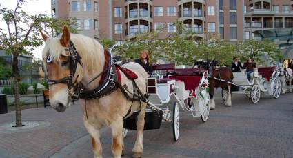 carriage-awaits-tourists-in-victoria-hotel