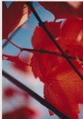 cropped-flowers-008.jpg