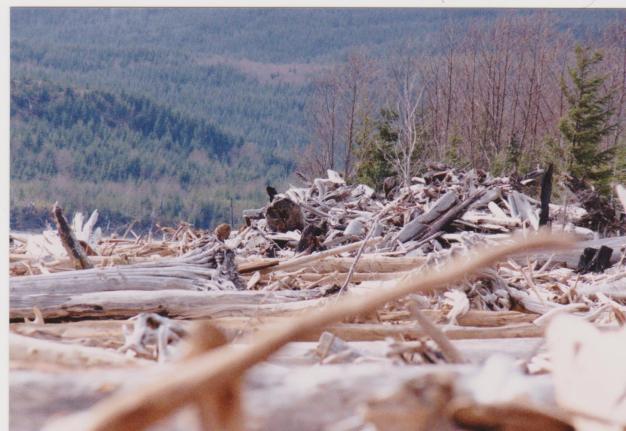Driftwood 001
