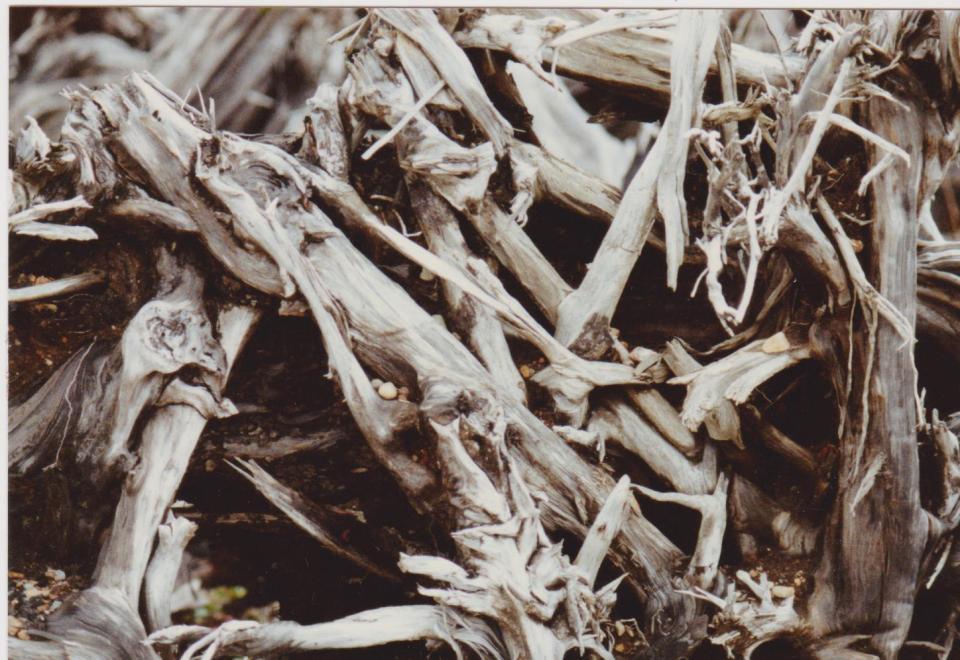 Driftwood 003