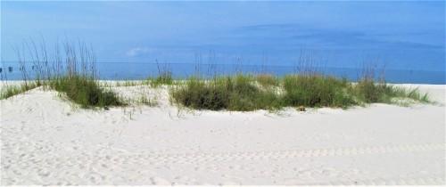 sea oat ms gulf coast may 9